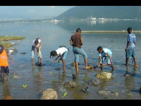People planting mangrove seedlings in the water along a section of the Palisadoes Road.