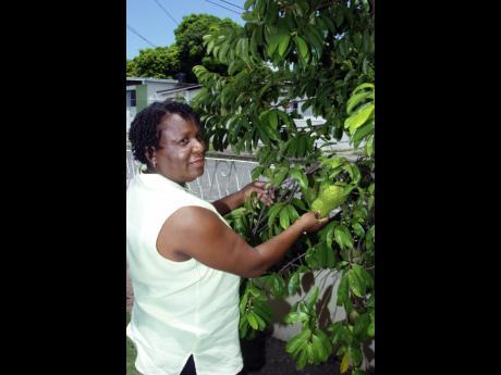 cáncer de próstata en Jamaica