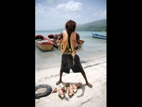 Photo by Hope Evans In this file photo, Savanna-la-Mar fisherman 'Fitzroy' Summerville showcases his catch of conch. A one-year ban on the fishing and sale of conch will come into effect shortly.