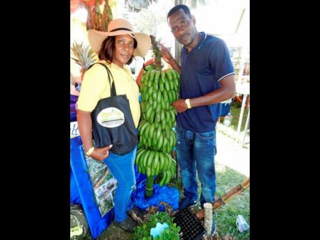 Brother and sister, Latoya and Carlton Roberts of the Derry Banana and Plantain Farmers Group in St Mary, show off a bunch of Fhia 25 bananas from the farm of Kenneth McLaughlin, chairman of the group, at Monday's St Mary Agri-Expo at Gray's Inn Sports Complex, Annotto Bay.