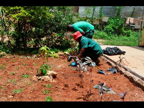 Two members of the RIU team redoing the garden at Refuge of Hope in Albion, Montego Bay, days ahead of Labour Day.