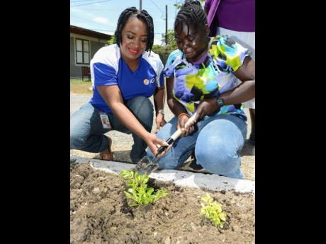 Good Job! GPS Coordinator of IGT Jamaica, Kellye Barwise (left) assists Nordia Lewis, Resident of Jerusalem! Home of the Mustard Seed Communities, in planting a Duranta Gold tree at a beautification exercise at the Home in Spanish Town, recently.