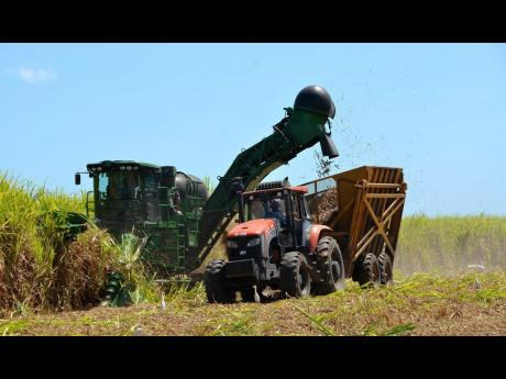 A state-of-the-art cane harvester in operation at Monymusk Sugar Factory, in Lionel Town, Clarendon.