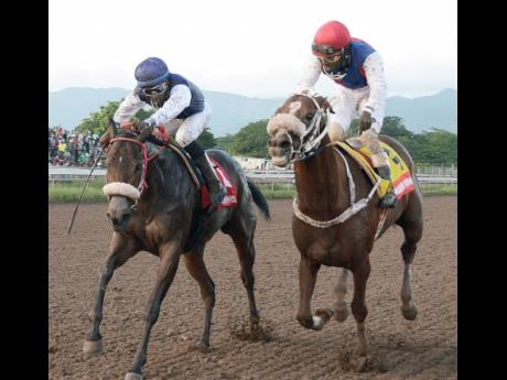 SHE'S A MANEATER (left) ridden by Omar Walker getting the better of WILL IN CHARGE ridden by Robert Halladeen in the 4th running of the (BURGER KING ) SUPERSTAKES, the 9th race at Caymanas Park on Saturday November 10, 2018.