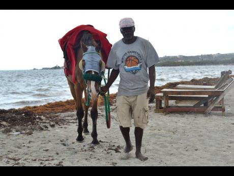 Trevor Champagnie, who makes his living by offering horse rides along the beach, is badly affected by the influx of sargassum. He says no one wants to use the beach because of the seaweed.