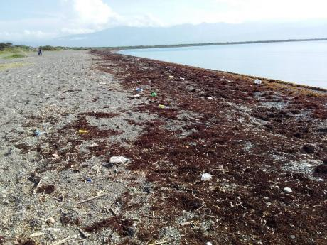 Sargassum influx on Jamaican coastline. The National Environment and Planning Agency (NEPA) is advising the public to expect an influx of mats of the brown seaweed known as Sargassum along several beaches across the island in the upcoming months.