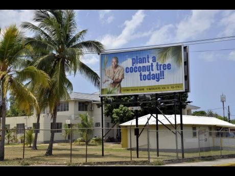 The headquarters of the Coconut Industry Board in Kingston.