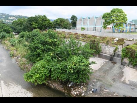 Trees and shrubs choke a section of the Sandy Gully adjacent to the Obistan Kindergarten Preparatory School off Washington Boulevard in St Andrew.