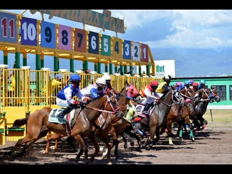 Horses storm out of their gates for the running of the fourth race at Caymanas Park on Saturday, August 10, 2019. Focus has now turned to a dwindling horse population at the track's stable, as one of the issues affecting revenue in local horse racing.