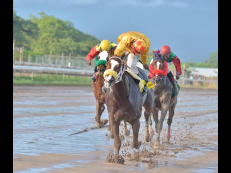 EXHILARATE destroys a class field to win the Gladiator Trophy ahead of SUPERLUMINAL and TOONA CILIATA at Caymanas PArk yesterday. He was being ridden by Aaron Chatrie.