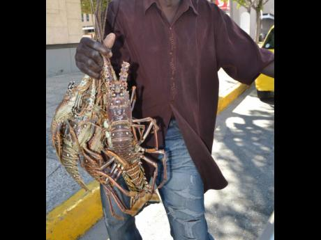 Spiny lobster exports have been hit by the displacement caused by COVID-19.