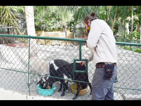 Hope Zoo curator Joey Brown pets a sheep inside the zoo's refurbished petting zoo and sheep enclosure which is also home to one goat, named Candy.