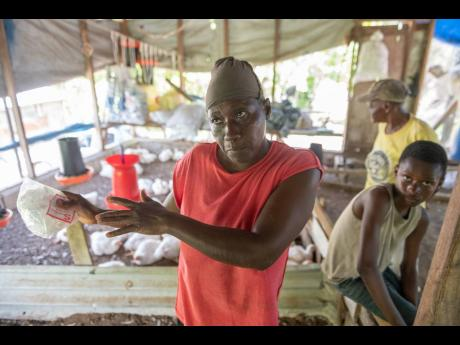 Emeline Johnson, a chicken farmer in Somerset, St Thomas Eastern, is calling for the incumbent, Juliet Holness, to address the issue of deplorable roads.