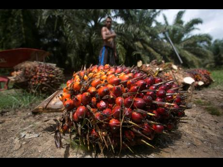 AP Photos A worker loads heavy bunches of palm oil fruit into a cart on a palm oil plantation in Sumatra, Indonesia, on November 13, 2017. Palm oil is virtually impossible to avoid. Often disguised on labels as an ingredient listed by more than 200 names,