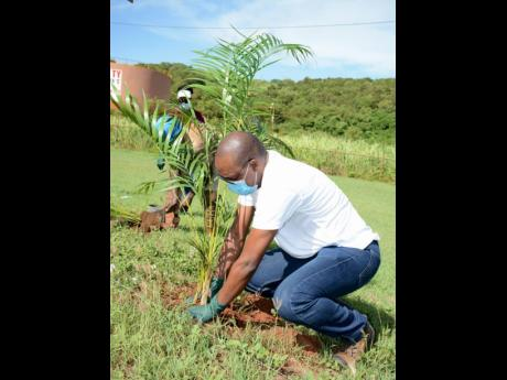 Noranda Bauxite's Vice-President and General Manager Delroy Dell plants a palm tree as part of a landscape upgrade programme at the bauxite company's Discovery Bay plant.