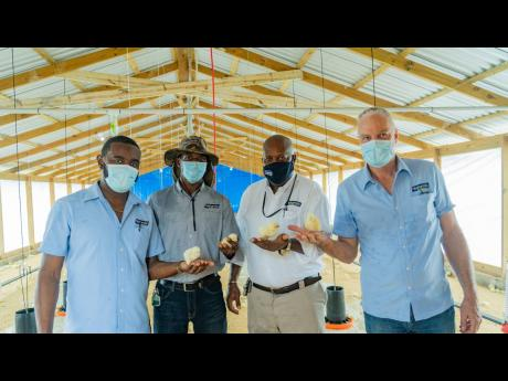 From left: Samuel Jones,  technical sales representative, Newport Mills; Dr Patrick Craig, veterinarian; Winston Thomas, regional sales manager; and Hans Muller, divisional manager, at the newly built poultry farm at Tamarind Farm Adult Correctional Centre