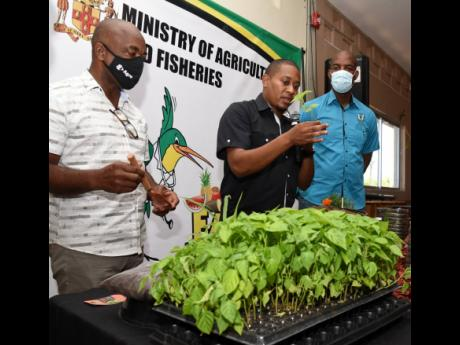 Floyd Green (centre), minister of agriculture and fisheries, demonstrates that he knows something about farming when he planted a Scotch bonnet pepper plant in a pot during the launch of the Backyard Gardening Programme. Observing are Locksley Waites (left