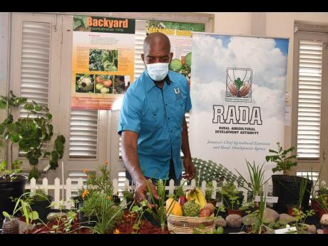 Member of Parliament for South East St Catherine, Robert Miller, looks at herbs during the launch of the Backyard Garden project at the HEART College of Construction Services in Portmore, St Catherine, on February 19.