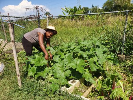 Debbie Baker checking on crops in her backyard garden.