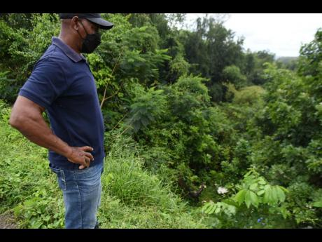 Michael Pottinger, vice-president of the St Catherine CDC, surveys overgrowth that has blanketed the bottom of the Riversdale natural bridge.