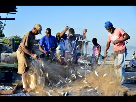 Fishermen helping each other to retrieve fish from there nets after an all-night outing in this February 2020 file photo.