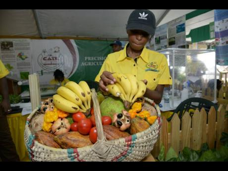 Sheena Gordon, laboratory instructor at the College of Agriculture, Science  Education, prepares a basket with fruits and vegetables at Denbigh Agricultural Show in 2017.