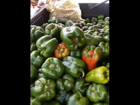 A crop of sweet peppers grown by Glenford Graham.