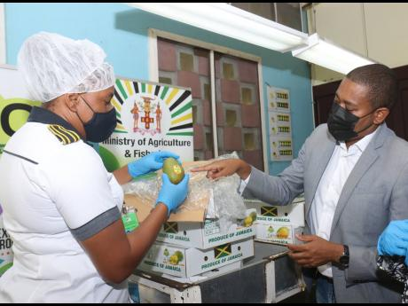 From left: Solangie Johnson, plant quarantine officer, shows Floyd Green, agriculture minister an East Indian Mango for shipment to the United States at the Plant Quarantine Unit, Sangster International Airport on Friday.
