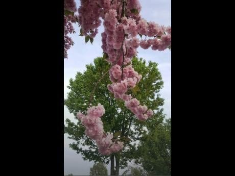 Spring is in the air – photo taken in Baltimore, Maryland