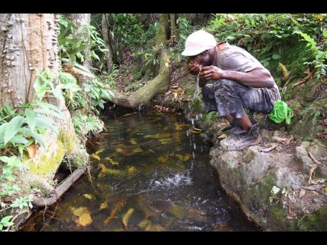 Sharma Welcome, a farmer and resident of Gully Road, drinks from a stream in the community in Mendez, St Catherine.  He says he cannot afford to buy trucked water so he is forced to drink from the stream.