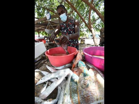 A man cleans a fresh catch of fish.