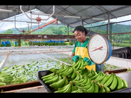 Jamaica Producers' interests include agri-business, port terminal operations and food and drink production.