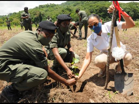 Jamaica Producers Group Corporate Affairs Manager Lisa Johnston (right) and cadet sergeants Ryanna Henry (centre) and Rashan Pilarchey plant a seedling during an official Tree Planting Ceremony. JP Farms has committed six acres in Chovey, St Mary, to a col