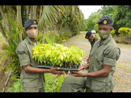 Jamaica Combined Cadet Forces Corporal Taydrian Ellis (left) and Corporal Shaun-Jay Henry showcase one of the many seedlings to be planted to mark the start of a reforestation project at the JP Farms in Annotto Bay, St Mary, on Wednesday.