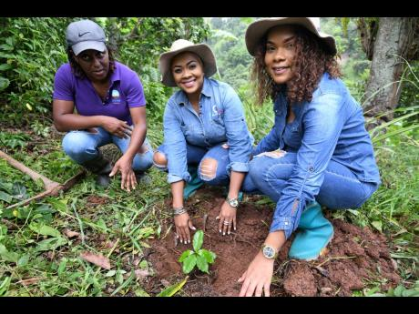 With the help of Patricia Fender (left), Debbie Bissoon (centre), and her sister, Rebecca Bissoon, get their hands dirty planting a coffee seedling.