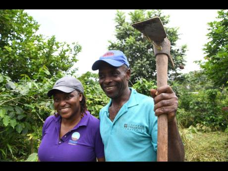 Husband and wife duo, Patricia and Derrick Fender, own a coffee farm in Freetown district, Woodford, in the hills of St Andrew.