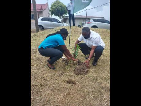 Custos of Manchester Garfield Green (right), and Beth-Ann Dixon from the Forestry Department, plant a tree at the Percy Junor Hospital with on June 10.