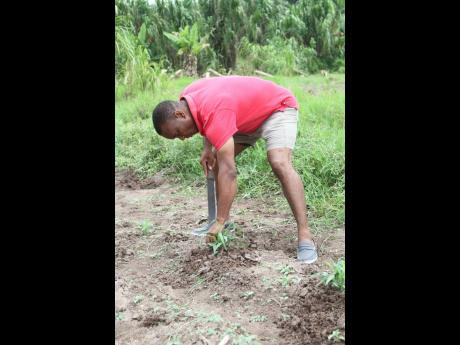 Detective Sergeant Shamel Russell on his farm in Danks Savoy, Clarendon.Detective Sergeant Shamel Russell on his farm in Danks Savoy, Clarendon.
