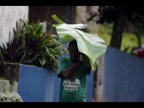 A man shelters under a banana leaf along the Gordon Town main road on Sunday during storm rains.