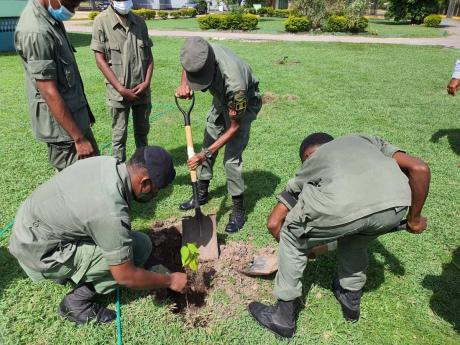Members of the Jamaica Combined Cadet Force planting trees at Calabar High School in St Andrew recently.