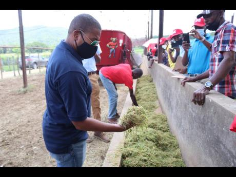 Agriculture and Fisheries Minister Floyd Green views silage made by a Total Mixed Ration machine at the 292-acre Bogue Hill Dairies in St Elizabeth, during a tour of the farm  last Friday. Founded in 1960, the Aubrey Taylor-owned Bogue Hill Dairies is the