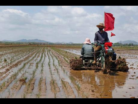 In this May 25 file photo, farmers plant rice at the Namsa Co-op Farm of Rangnang District in Pyongyang, North Korea. North Korea is releasing emergency military rice reserves as its food shortage worsens, South Korea's spy agency said on Tuesday.