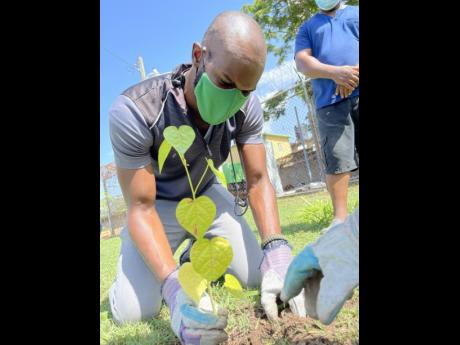 Prospective member Janoy Sinclair was knee deep in service as he secured the roots of this new plant.