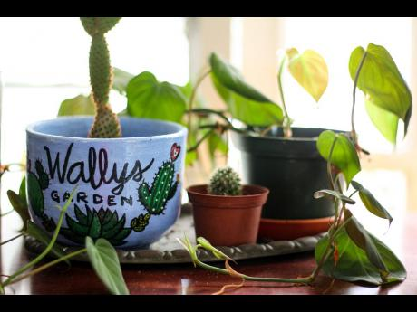 Wally's Garden does not have many succulents, but he does have small ones like this cactus planted in a personalised teacup pot.