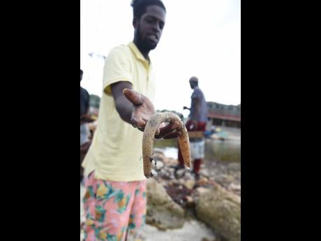 A man shows one of the sea creatures that died along the shoreline of the Hellshire Fishing Beach in St Catherine last Tuesday from what is said to be a pollutant in the water.