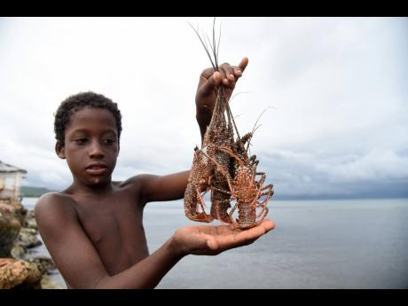 A boy shows off some lobsters that he caught after they crawled out of the sea at the Hellshire Fishing Beach last Tuesday.