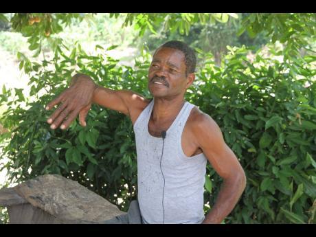 Orville 'Marshall' Graham, farmer of Dam Head community. Clarendon.