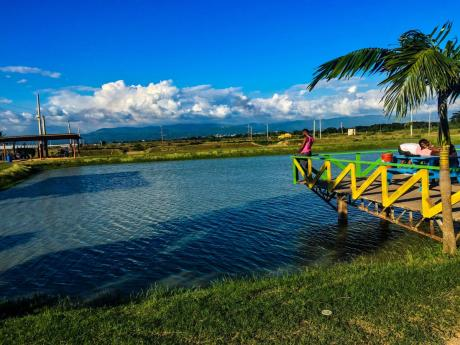 Cool blues – shades of serenity. Photo at Dacosta Farm, Old Harbour, St Catherine